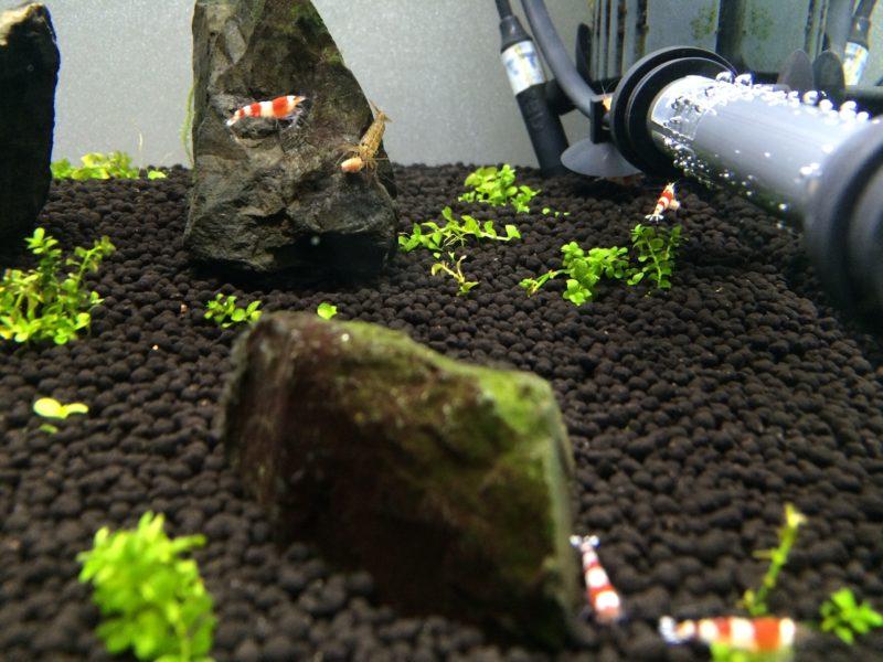 石に黒髭コケや緑藻が付いた状態