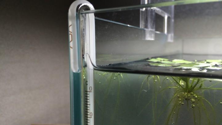 水槽用水温計の選び方!