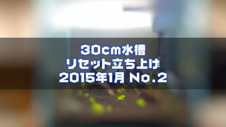 30cm水槽リセット立ち上げ2015年1月 No.2