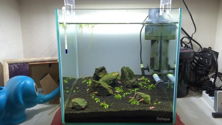ニューラージパールグラス単植の30cmキューブ水槽