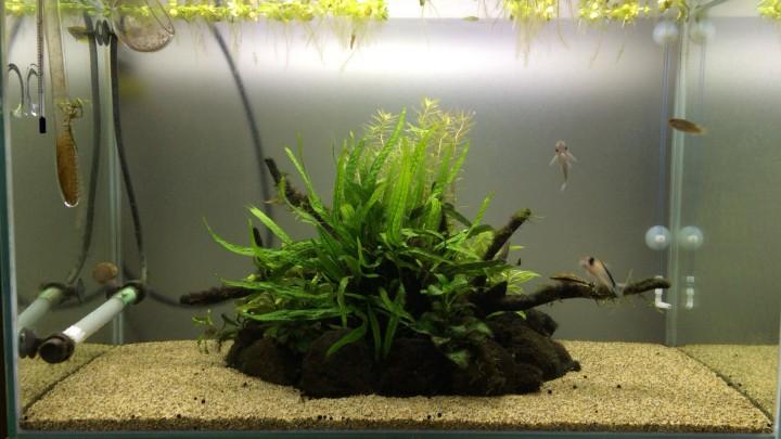 陰性水草水槽