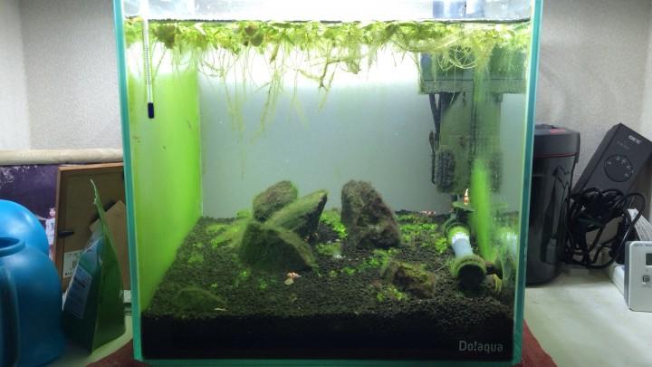 苔まみれの30cm水槽