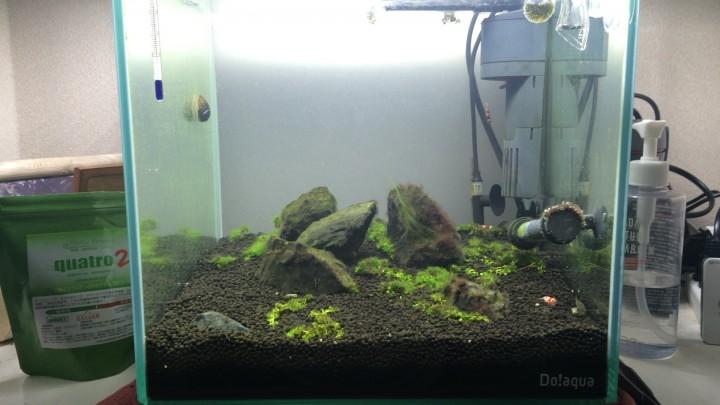 緑の絨毯が頓挫 30cm水槽