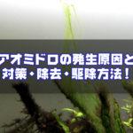 アオミドロの発生原因と対策・除去・駆除方法!