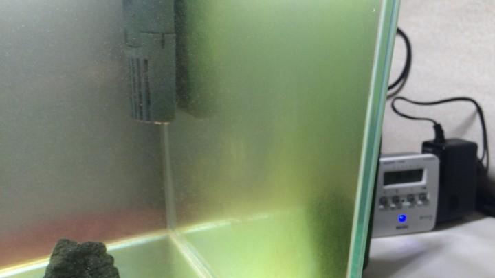 水槽ガラス面のコケ