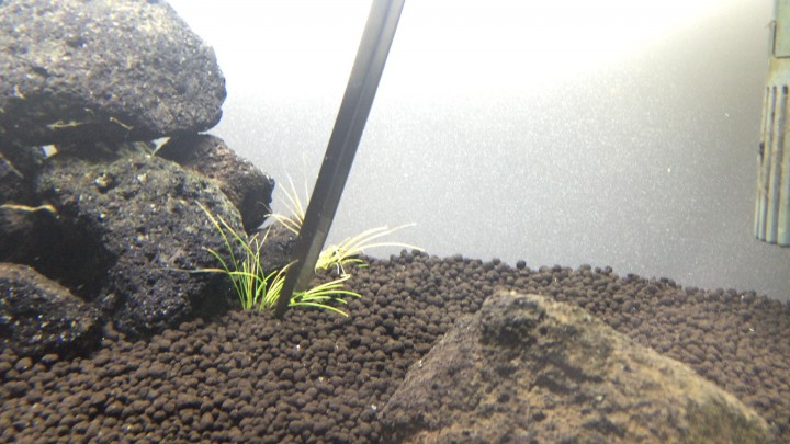 ヘアーグラスショートの植栽方法