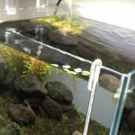 水換え頻度を週2回に変更した30cm水槽 32日目