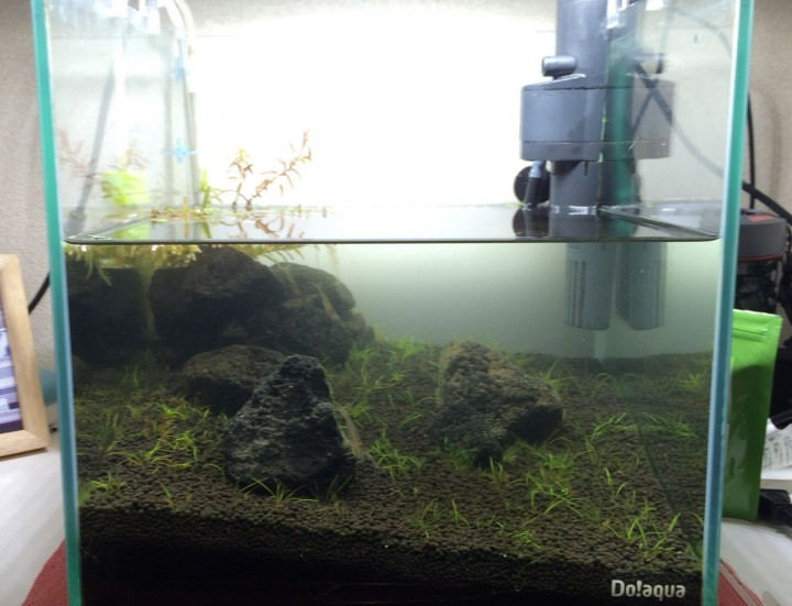 水槽のメンテナンス