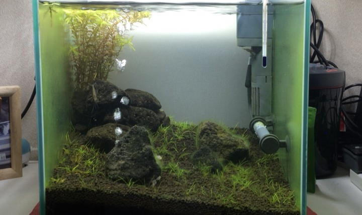 ガラス面に付く緑藻の量