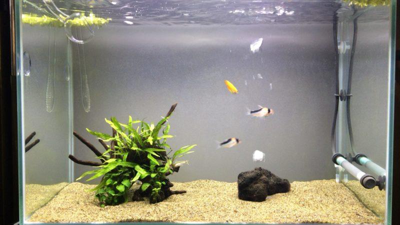 陰性水草60cm水槽の状態