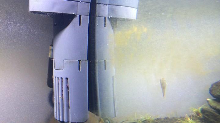 珪藻がガラス面に