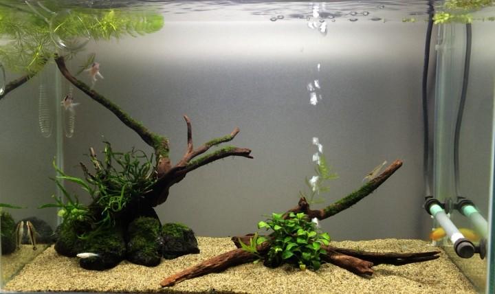 流木を変えてレイアウト変更した60cm水槽