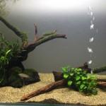 ウィローモス類をトリミングした60cm陰性水草水槽