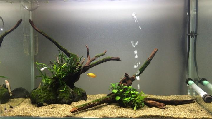 60cm陰性水草水槽