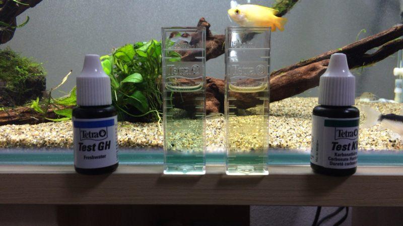 陰性水草水槽の水質
