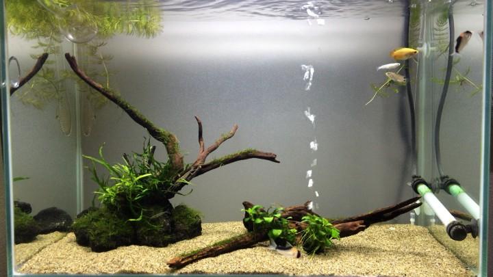 水槽の水質がアルカリよりになっている60cm陰性水草水槽