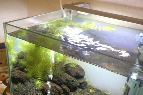 30cm水槽