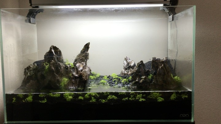 ニューラージパールグラスを植栽直後