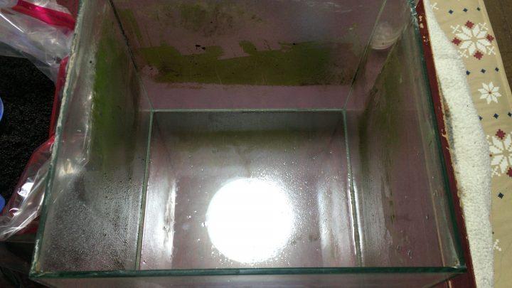 空っぽになったコケまみれの水槽