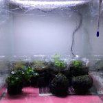 水草の水上栽培を空になった水槽で始めた!