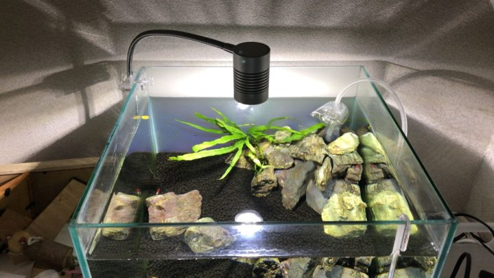 gex LED リーフグローを30cm水槽に設置