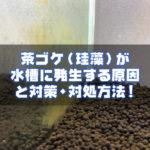 茶ゴケ(珪藻)が水槽に発生する原因と対策・対処方法!