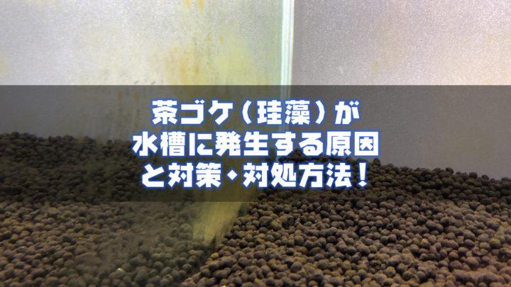 茶ゴケ(珪藻)が水槽に発生する原因と対策・対処方法