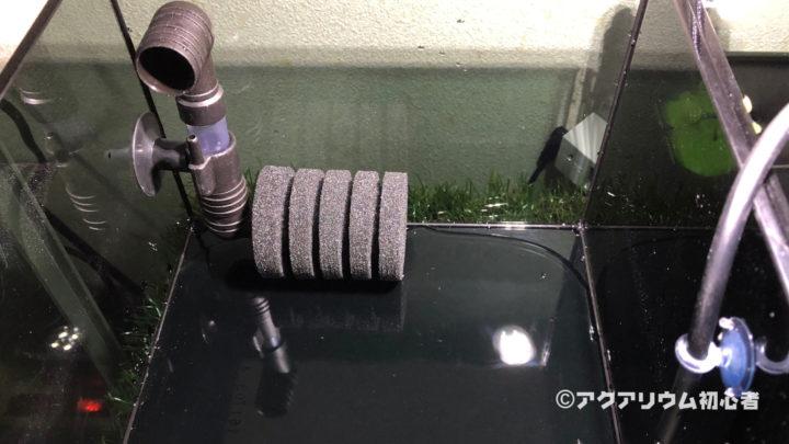 超小型水槽にスポンジフィルターをセットし注水