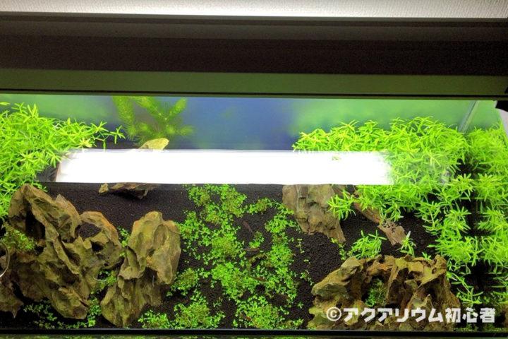 水槽を上から見た水草の植栽具合