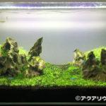 カリウム添加で緑藻が減った60cm水槽 72日目