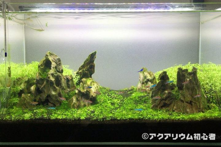 緑藻が発生している60cm水槽