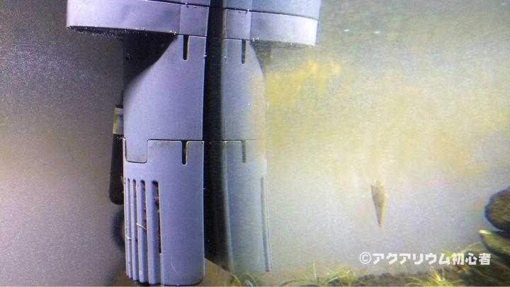 珪藻が水槽ガラス面に