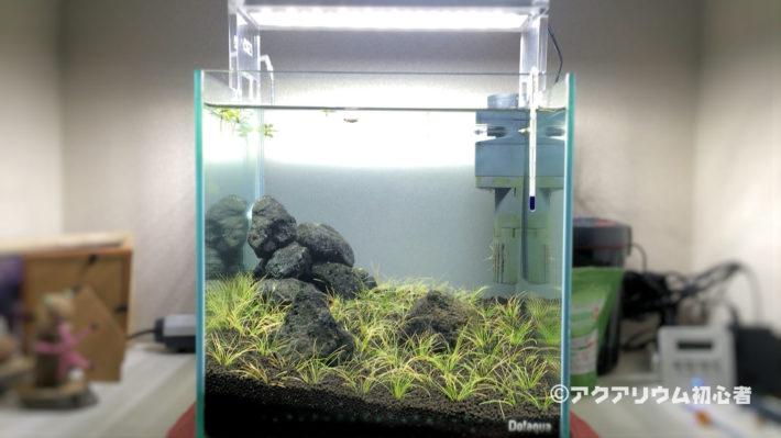 ヘアーグラスショートの植栽が完了した30cm水槽