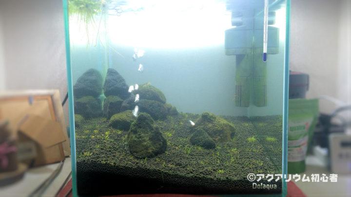 30cm水槽の写真