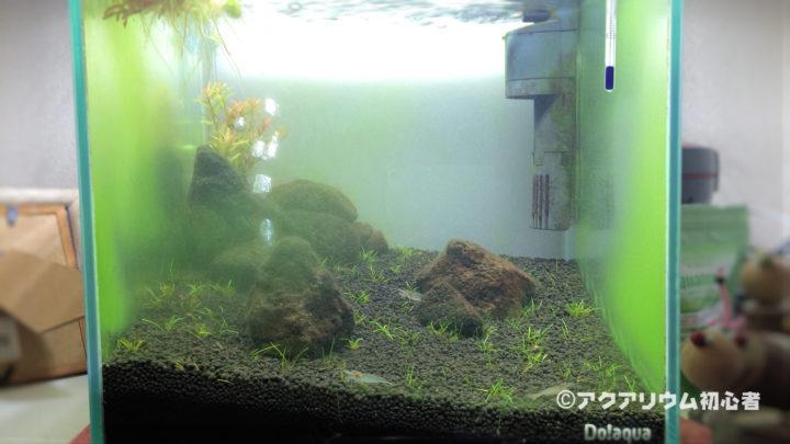 水槽内が富栄養化気味でガラス面に緑藻が