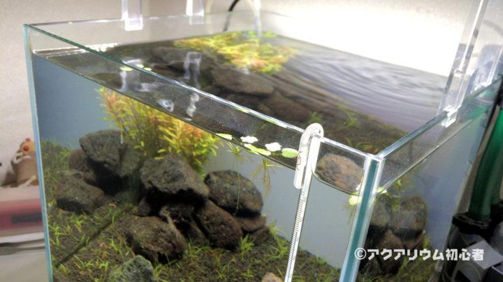 換水頻度を週2回に変更した30cm水槽