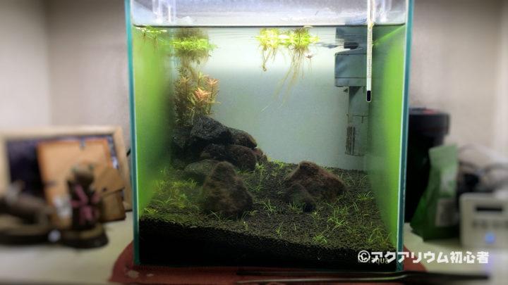 ガラス面に緑藻が付着しまくる30cm水槽