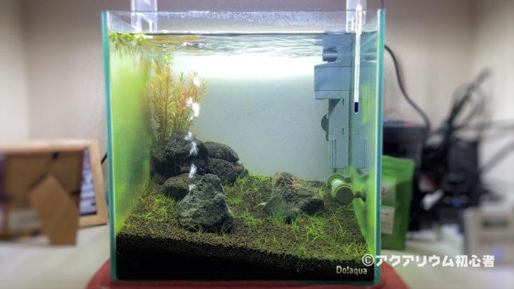 水槽の緑藻の状態