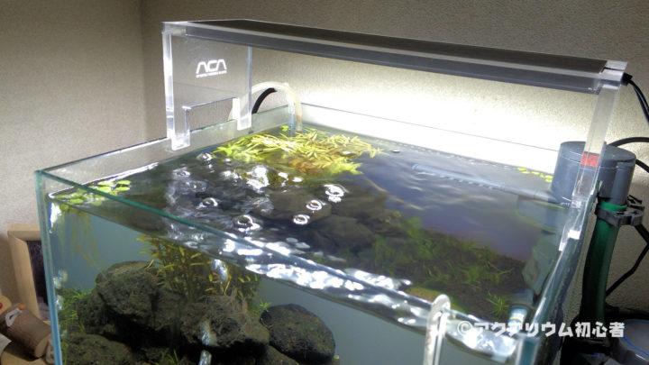 照明点灯時間を8時間から6.5時間に変更した30cm水槽