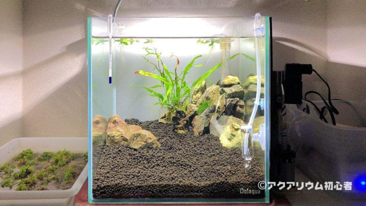 30cmキューブ水槽にニューラージパールグラス