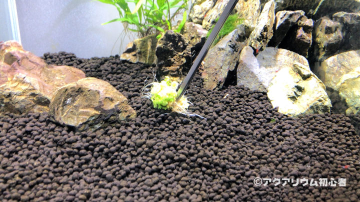 ニューラージパールグラスを水槽に植栽