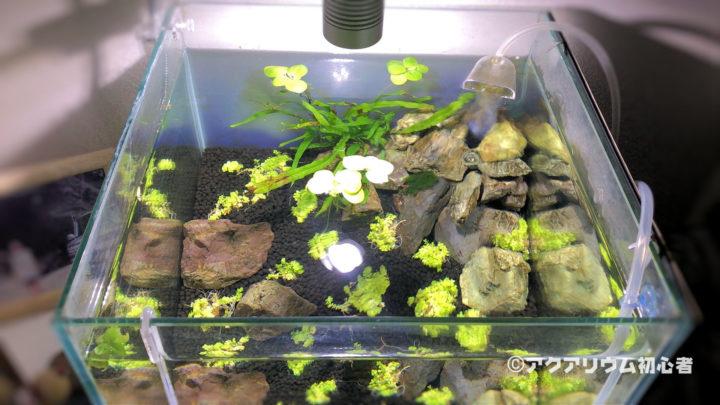30cmキューブ水槽に植栽