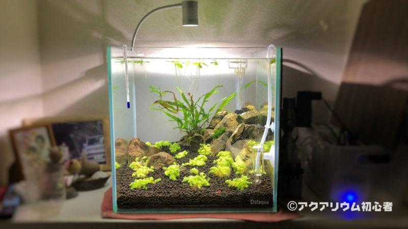 水草育成向けLED照明に変えた30cmキューブ水草水槽!1週間