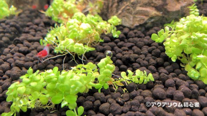 水草育成向けLED照明に変えて気泡をつけた水草