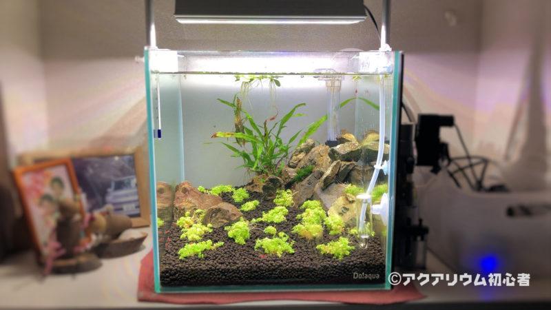 LED照明を変更した30cmキューブ水草水槽
