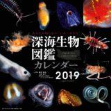「深海生物図鑑 カレンダー」2019年版