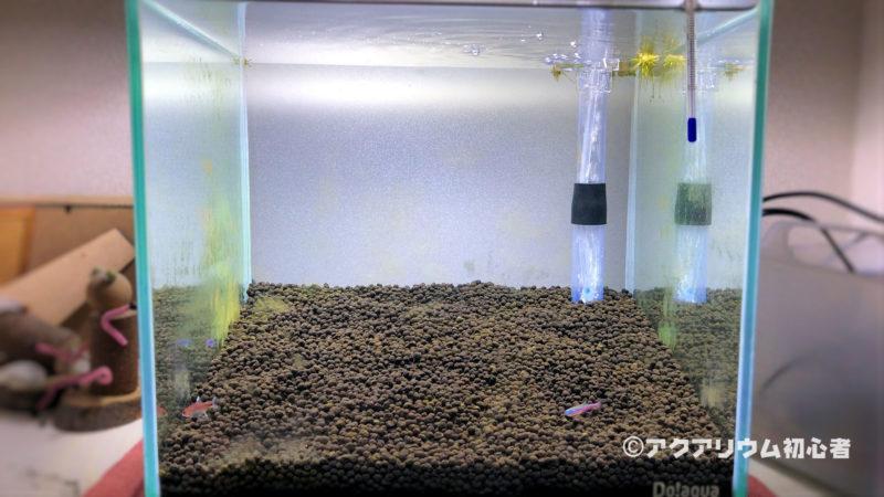 茶ゴケ(珪藻)対策のために小型エビを導入
