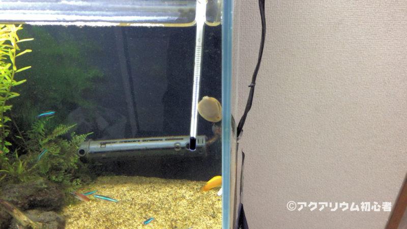 フネアマ貝がガラス面を這っているところ