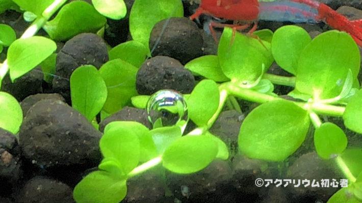 ニューラージパールグラスからの気泡