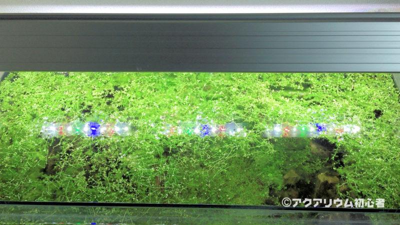 水草をトリミングした後に油膜が発生する場合への対策方法